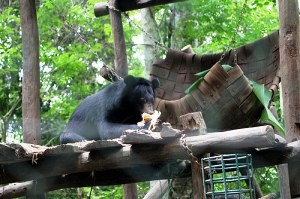 Bear Rescue Center, Luang Prabang