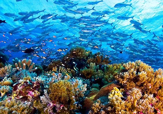 Tubbataha Reefs, Phillipines