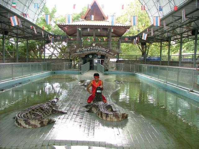 What You Can See and Do at the Pattaya Crocodile Farm