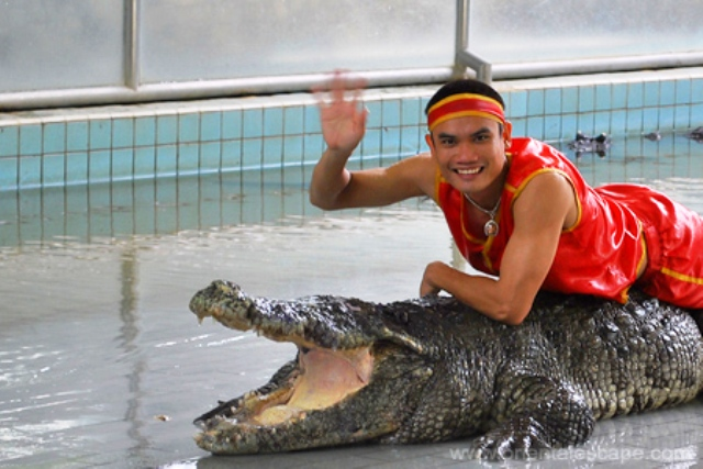 A Mind-Boggling Experience at the Crocodile Farm - Cush Travel Blog