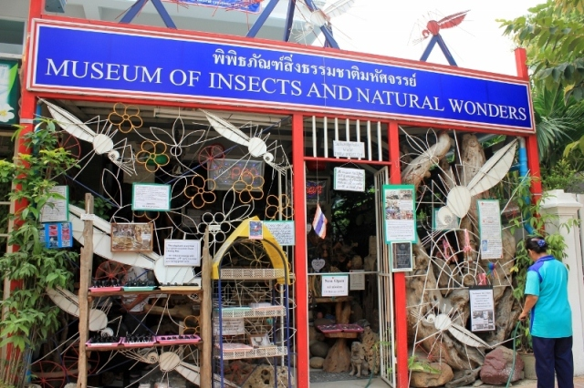 Creepy Crawlies at the Museum of Insects and Natural Wonders