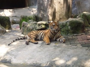 Why You Must or Musn't See the Sriracha Tiger Zoo